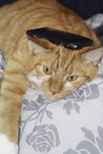 Cats & Gadgets