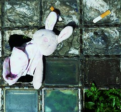 When London Road Stole Pink Rabbit (teaselbrush) Tags: road city uk pink england urban rabbit london abandoned toy lost sussex coast town seaside junk brighton sad puppet circus cigarette east drain glove preston british detritus ends
