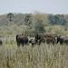 600 elefantes habitam o P.N. Liwonde