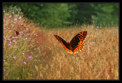 This Wonderful day! (Joey Ricard) Tags: wonderful butterfly pretty maryland westernmaryland appleorchard stateforest greenridge greenridgeforest