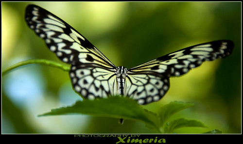 Edinburgh Butterfly World