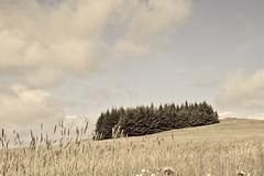 Summer breeze ... (Fjola Dogg) Tags: blue summer sky cloud naturaleza tree green nature canon landscape iceland islandia outdoor natureza natur natuur natura sumar sland loodus alam luonto lanature  naturen 2011 proda charakter 50d naturae aard prroda naturalesa  tbit fjoladogg bncht