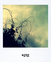 "#Dailypolaroid #292 #fb • <a style=""font-size:0.8em;"" href=""http://www.flickr.com/photos/47939785@N05/5937629140/"" target=""_blank"">View on Flickr</a>"