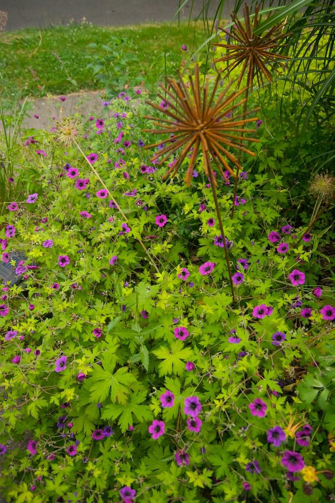 geranium ann folkard 394