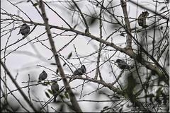Waiting for the storm (Nstor Pugliese) Tags: storm argentina birds pjaros tormenta yerba buena tucumn