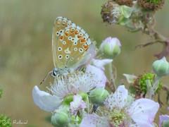 Papillon (Domi Rolland ) Tags: france nature fleur animal canon papillon millau 2011 midipyrénées aboveandbeyondlevel1