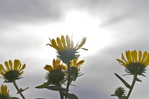 found some sun!