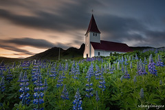 Vik (Vik i Myrdal) Iceland (Vinnyimages) Tags: flowers sunset church iceland village vik vikimyrdal southiceland myrdalsjokull myrdalsjokullglacier vinnyimages wwwvinnyimagescom