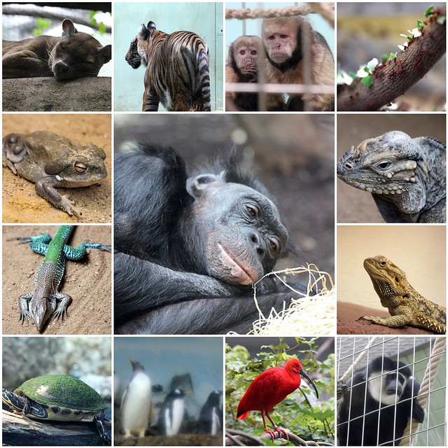 A day in Frankfurt Zoo