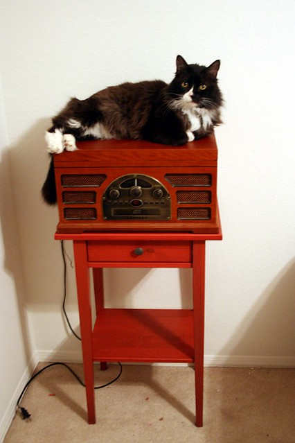 Cat on Radio