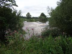 The River Teviot near Harestanes (cessna152towser) Tags: jedburgh scottishborders harestanes monteviot rnbteviot