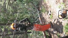 IMG_1828 (scrumtrulescent) Tags: camping mist fire colorado hiking chainsaw trail spike nalgene stihl rampartrange ponderosapine pikenationalforest beetlekill s212