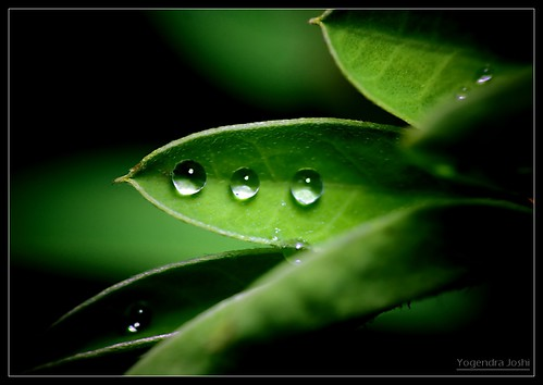 Three Drops Lined Up by Yogendra174