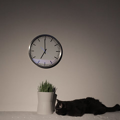 (SONG TSE  ) Tags: clock zeiss cat 35mm canon time chocolate    5dii distagont235ze