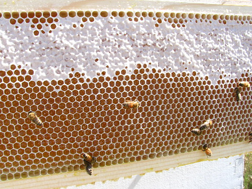 More Honey!