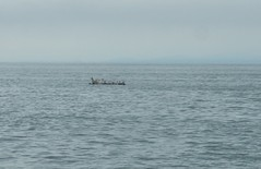 seagull raft