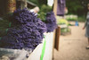mayfield lavender (In Memory Lane~) Tags: summer nature 35mm dof bokeh mark lavender ii 5d mayfield 35l