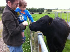 Owen strokes a cow!