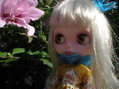 Bijou and the Rose of Sharon