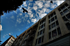 Pigeons Flying over Downtown LA (TheJudge310) Tags: california blue sky birds clouds flying losangeles downtown pigeons oldbuildings downtownla losangelescalifornia lacounty downtownlosangeles californiabirds birdsflying