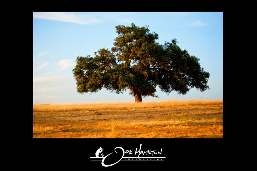 Joe Hamilton Photography - Ramona, California