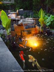 Minnesota Landscape Design inspired by Bali ~ Natural Stone Water Feature / Koi Pond / Water Garden Night Lighting (Switzer's Nursery & Landscaping) Tags: bali water minnesota design waterfall pond natural landscaping glenn patio c