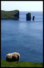 Sea, Rocks and Sheep (little_frank) Tags: ocean blue light sea wild panorama cliff seascape nature beautiful beauty grass rock wonderful bay coast amazing scenery europe heaven paradise loneliness view place sheep natural awesome horizon north dream vertigo dramatic peaceful tranquility atlantic erosion formation silence edge stunning fjord nordic wilderness northern idyllic faroeislands breathtaking slope impressive paesaggio drangar archipelago vastness seastack outstanding waterscape marvellous dizziness breathless unspoiled faroer immensity isole froyar frerne stakkur faroese vagar vgar foroyar froerne seabord frer isolefaroe drangur