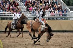rodeo_01 (StephenWilliDesigns) Tags: carnival cowboy ferriswheel rodeo rides demolitionderby grandtetonnationalpark fairgames jacksonholewyoming tetoncountyfair pigwrestling figure8races