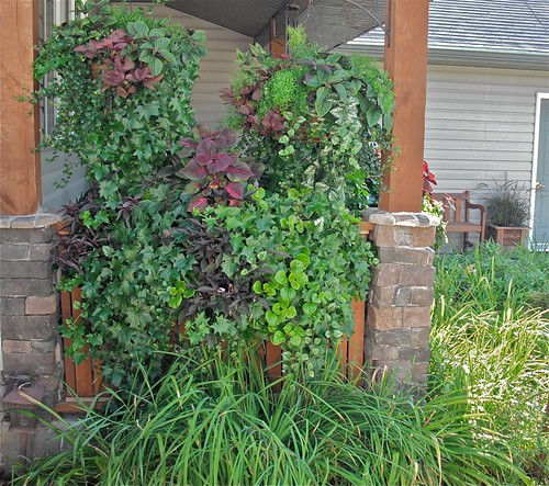 The hanging baskets give privacy and shade from the west sun.