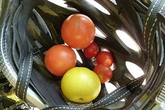 Free tomatoes