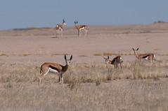 Posing (MrBlackSun) Tags: park dune lodge sesriem namibia sossusvlei namib nwr 2011 sossus naukluft namibnaukluftpark namibnaukluft sossusdunelodge namibia2011 kuisibriver