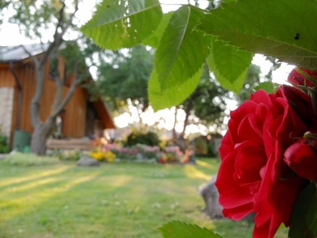 Guesthouse's garden
