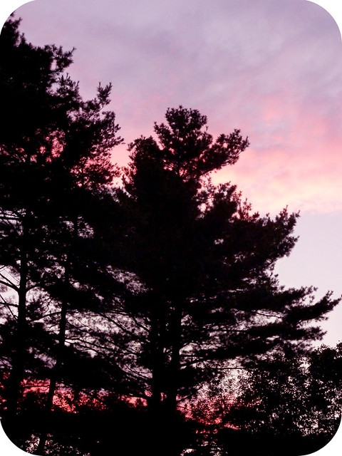 Sunset in the Pines, Holyoke, MA