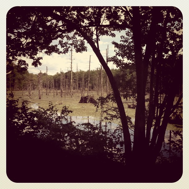 Day 6 : Beaver dam sighting on airline trail, en route from Willimantic to Eastford, CT