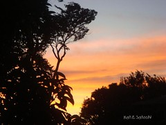 sunset8611