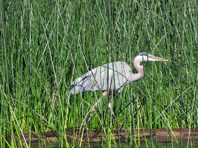 2011-08-07 Elk Lake_0034