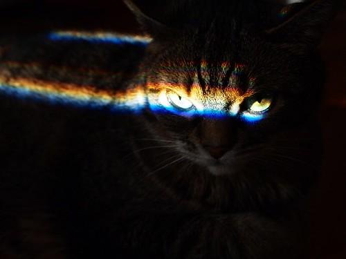 evil cat?