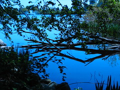 Lost Lagoon (Marcia Portess-Thanks for a million+ views.) Tags: blue nature water azul reflections agua parks silhouettes bleu stanleypark reflejos lostlagoon shadowslight sombrayluz vancouverbccanada westendvancouver kartpostal marciaportess