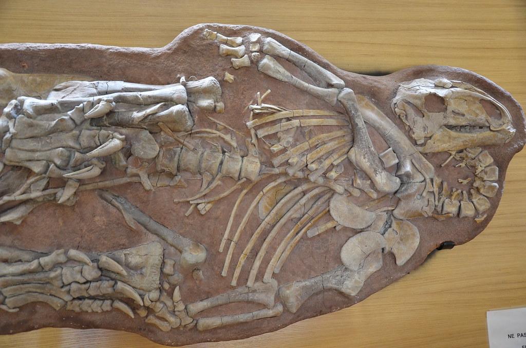 Ténontosaure