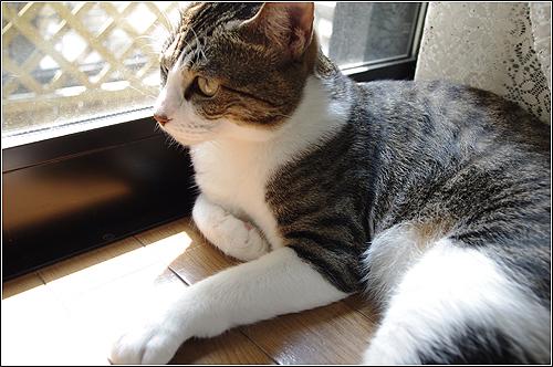 今日の猫(2011-08-14)
