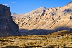 In progress (henrikj) Tags: india mountain mountains nature ecology scenery asia 9 september mount land environment himalaya environmentalism 2009 ladakh ecosystem himachalpradesh sarchu manalilehhighway indianhimalaya