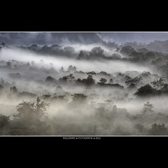 Malaysia: Morning jungle blues [Explored] (Bas Lammers) Tags: cloud mist tree beauty sunrise hill miri jungle malaysia magical mulu softtones canon50d mygearandme mygearandmepremium mygearandmebronze mygearandmesilver mygearandmegold