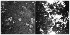 (Oscar Carlsson) Tags: diptych rangefinder ricoh500gx calber09 diptyk fomafomapan film:iso=80 film:brand=foma film:name=fomafomapan100 developer:brand=calbe developer:name=calber09 fomapanfoma100 filmdev:recipe=7002