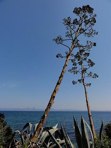 Slanty Trees