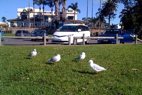 Seagulls (#4)