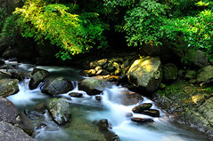 Milky Stream (Vincent_Ting) Tags: morning sky nature water forest waterfall nikon rocks stream taiwan taipei rays   milky  silky