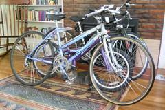 Cat and bikes