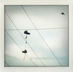 I went in search of my 193rd... (Phoneography Pilgrim) Tags: bird flying shoes overcast wires 365 impression shoesonawire i365 phoneography justgotlucky iphone4 193365 iphone365 iphoneography shakeitphoto i365project phoneographer