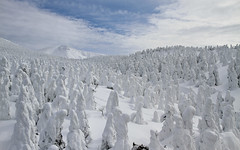Narnia (Marquisde) Tags: trees mountain snow ski japan landscape scenery resort 7d yamagata zao snowmonsters  juhyo zaoonsen