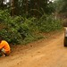 Colhendo amoras selvagens na estrada